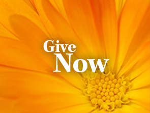 Donate Today Ad